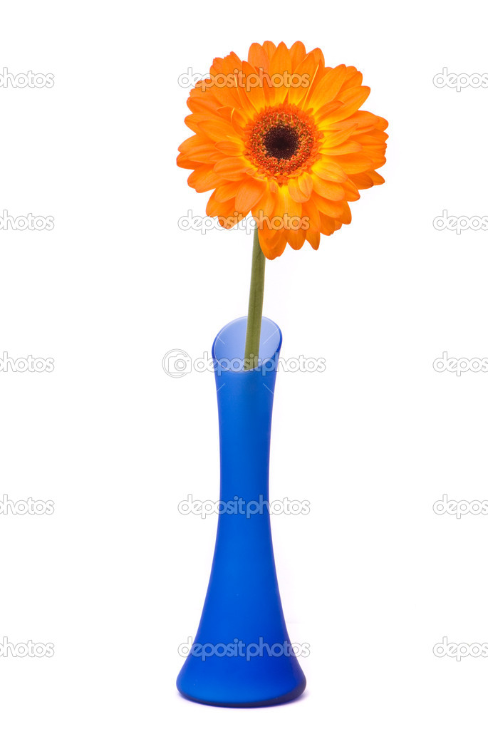 Orange gerbera flower in blue vase on white background — Stock Photo #1744842
