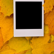 Blank card on the maple leaves — Stock Photo #1886678