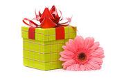 Rosa Gerber-Blumen und Geschenk-box — Stockfoto