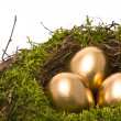Golden eggs in a nest — Foto de Stock