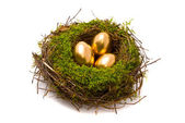 Gold eggs in a nest — Stock Photo
