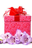 Beautiful gladiolus and gift box — Foto de Stock