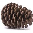 Front view of a pine cone — Stock Photo