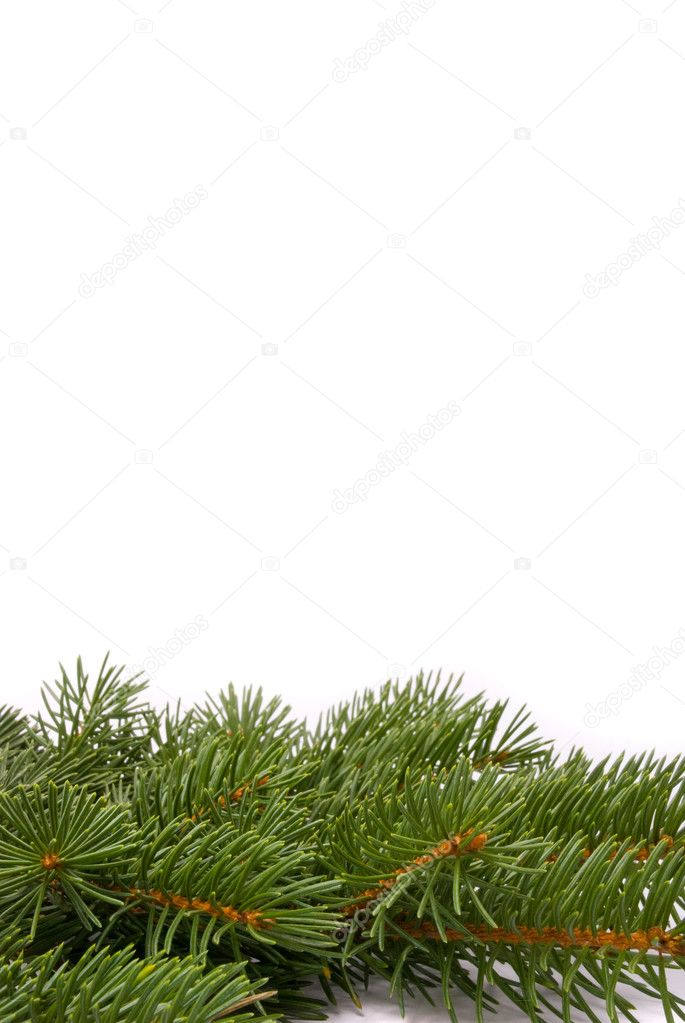 Close up of fir tree branch isolated on white — Stock Photo #2306485