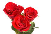 Red roses on a studio white background. — Stock Photo