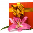 Pink lily and gift box on a white — Stock Photo