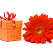 Stock Photo: Red gerber flower and gift box
