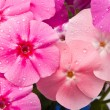Beautiful flowers with water drops — Stock Photo