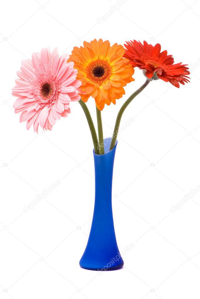 sch ne gerber blumen in blauer vase stockfoto 2430563. Black Bedroom Furniture Sets. Home Design Ideas