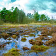 Belorussian bog — Stock Photo