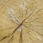 Closeup old wooden cut texture — Stock Photo