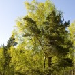 Sunny spring forest — Stock Photo #2465548