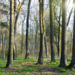Spring forest — Stock Photo #2467371