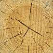 Closeup old wooden cut texture — Stock Photo