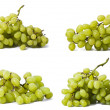 Green vine set — Stock Photo