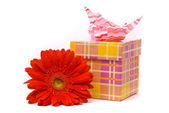 Red gerber flower and gift box — Stock Photo