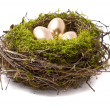 Golden eggs on a nest — Stock Photo