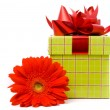 Gerber flower and gift box — Stock Photo
