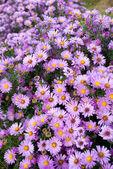 小さな花の背景 — ストック写真