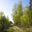 Sunny spring forest — Stock Photo #2481805