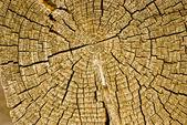 Макро старый деревянный вырезать текстуры — Стоковое фото