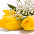 Yellow tulips on a white background — Stock Photo