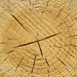 Closeup old wooden cut texture — Stock Photo #2505364