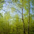 Sunny spring forest — Stock Photo #2505447