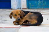 Stray dog — Stock Photo