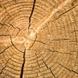 Close-up old wooden cut texture — Stock Photo