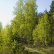 Sunny spring forest — Stock Photo
