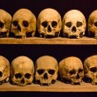 Stock Photo: Humskulls in crypt