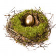 Gold egg in a nest — Stock Photo
