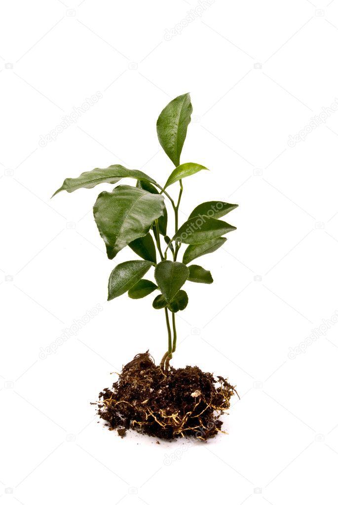 Small Plant Stock Photo 169 Hintau Aliaksey