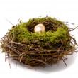Gold egg in a nest — Stock Photo #2622637
