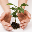 Young plant in woman hand — Stock Photo