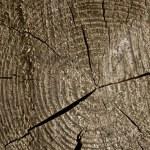 Closeup old wooden cut texture — Stock Photo #2647065