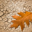 Oak leaf on cracked ground — Stock Photo