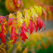Autumnal bush — Stock Photo #1381320