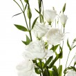 White flowers on the white background — Stock Photo