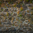 Wall texture with grasses — Stock Photo