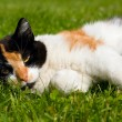 Cat on a grass — Stock Photo