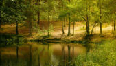 The lake in the forest — Stock Photo