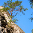 Pine on Rock — Stock Photo #1492670
