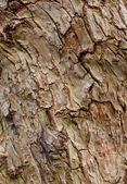 Texture of surface of old tree — Stock Photo