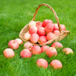 Apples in bucket and on grass — Stock Photo