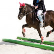 Stock Photo: Training pony