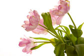 Bunch with curly tulips — Stock Photo