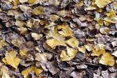 Die gefallenen Blätter decken Sie den Boden — Stockfoto
