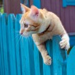 Red cat on a fencing — Stock Photo